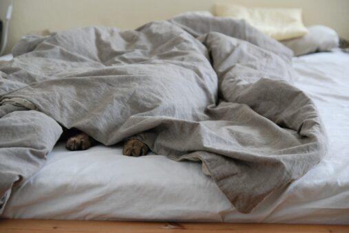 """""""Unter einer Decke stecken"""""""